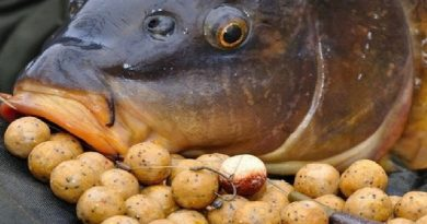 Carp fishing - Part 2