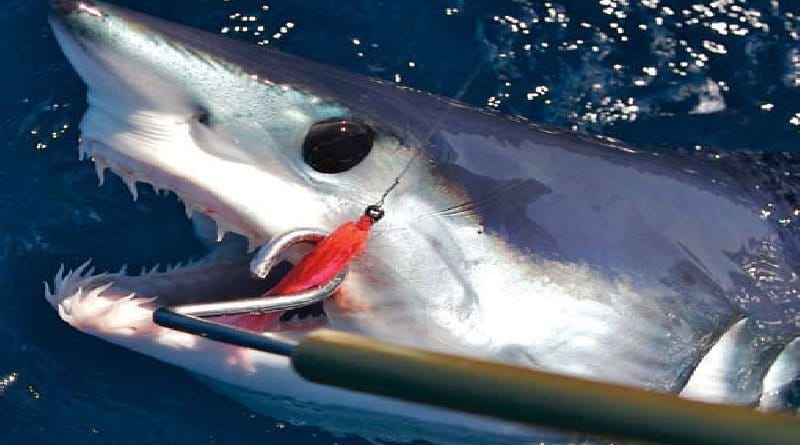 Sport fishing for sharks in the sea