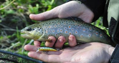 Grayling and brook trout spinning