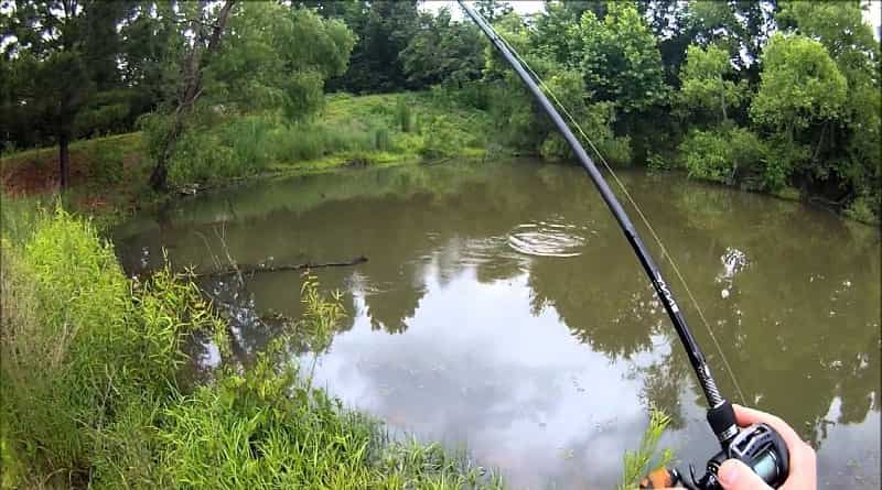 fishing in the summer for spinning