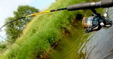 Choose a spinning rod for fishing