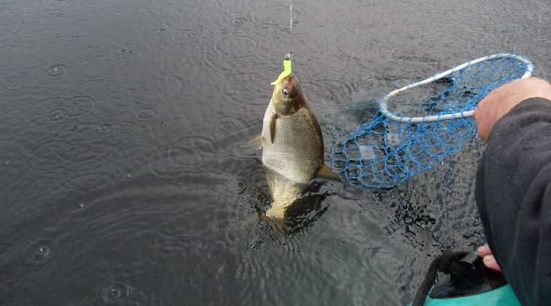 Fishing on bream in spring