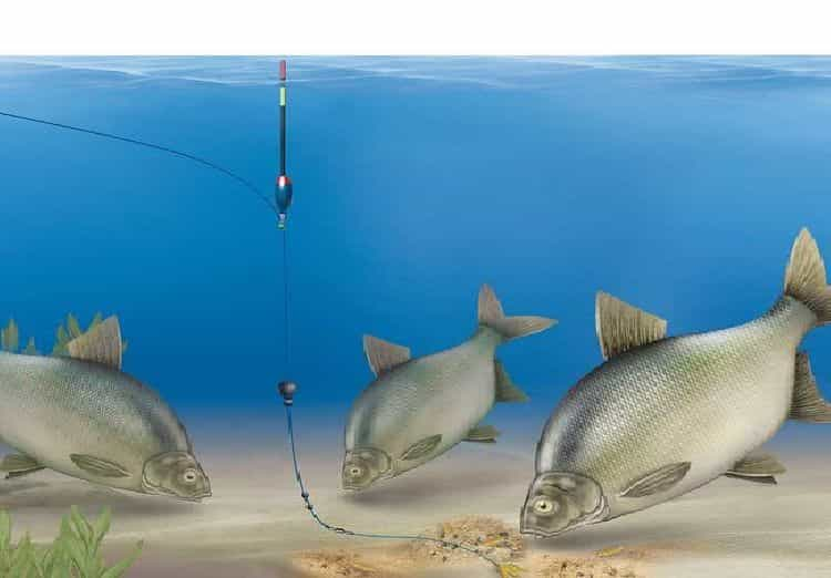 Fishing for float tackle