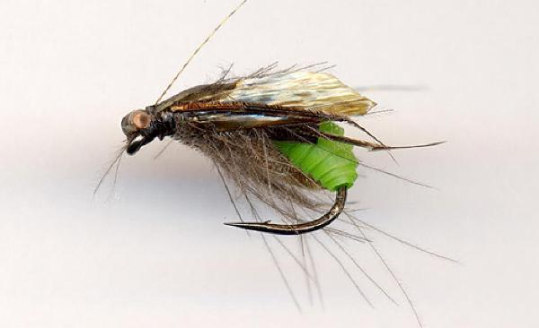 fly Sedge