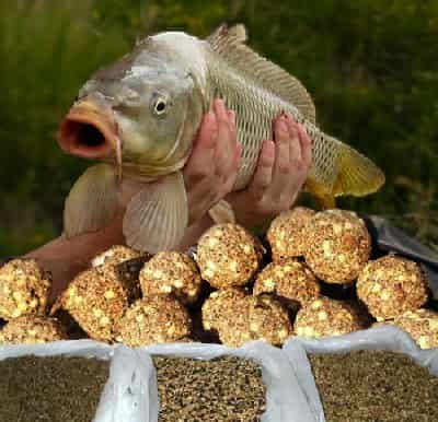 The use and choice of baits for carp