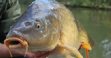Pesca de la carpa - parte 1