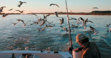 Sea fishing and fishing principles