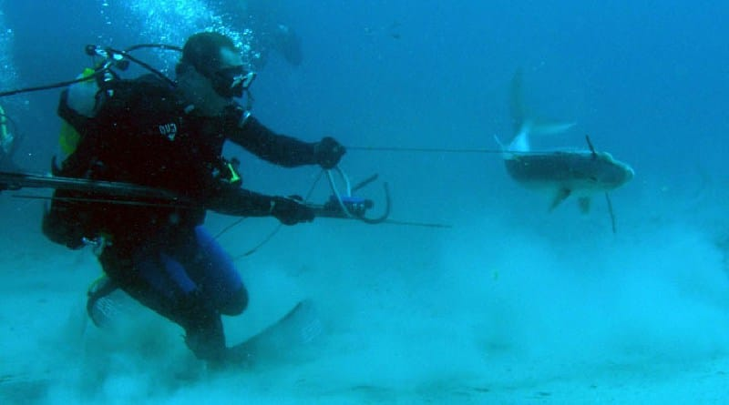 Trophy spearfishing in ocean