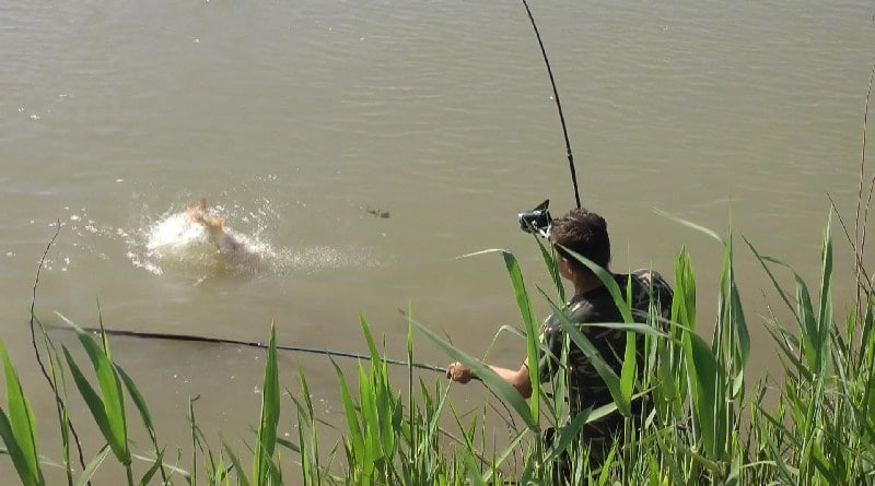Catching carp on fast rivers