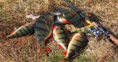 How to Catch Big Perch