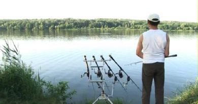 Spring carp in rivers
