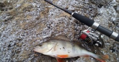 Tips for Catching Big Perch