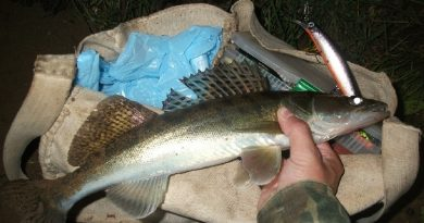 Catching Walleye at Night on Spinning Lures